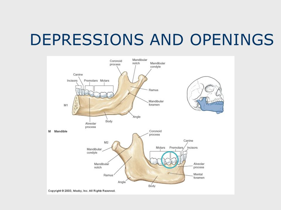 DEPRESSIONS AND OPENINGS