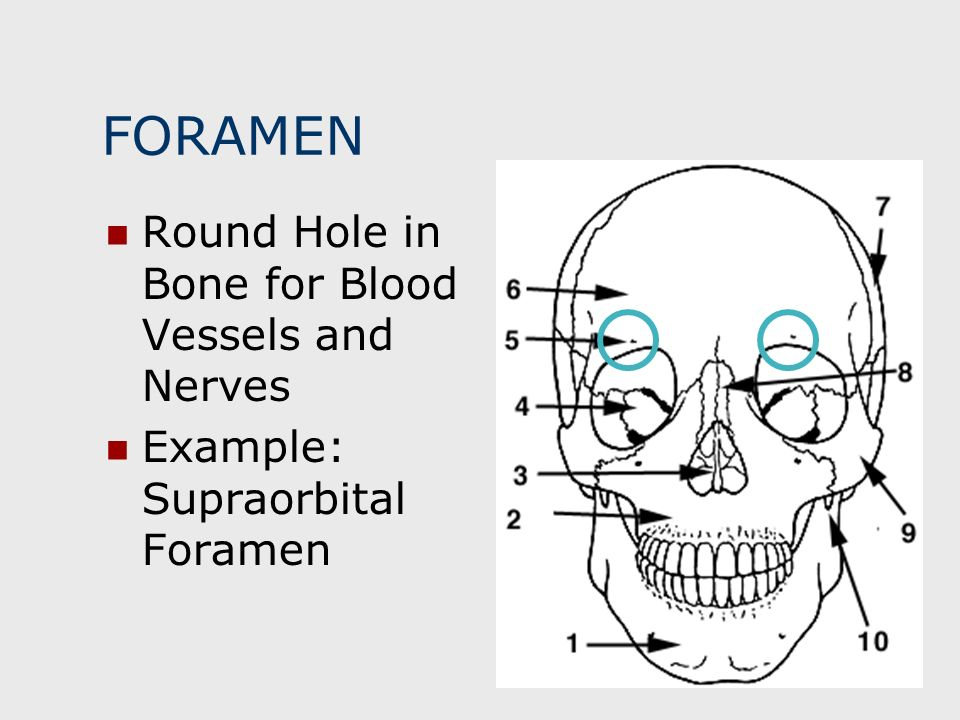 FORAMEN Round Hole in Bone for Blood Vessels and Nerves