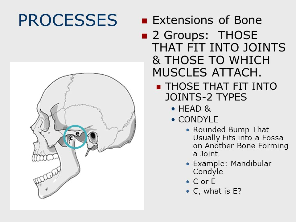 PROCESSES Extensions of Bone
