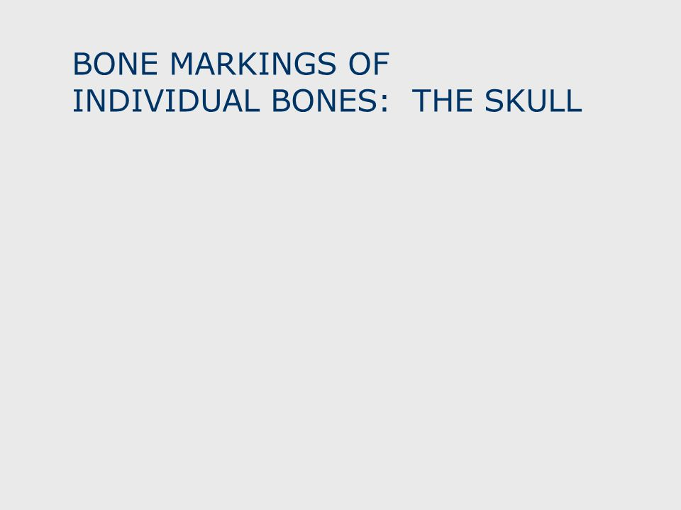 BONE MARKINGS OF INDIVIDUAL BONES: THE SKULL