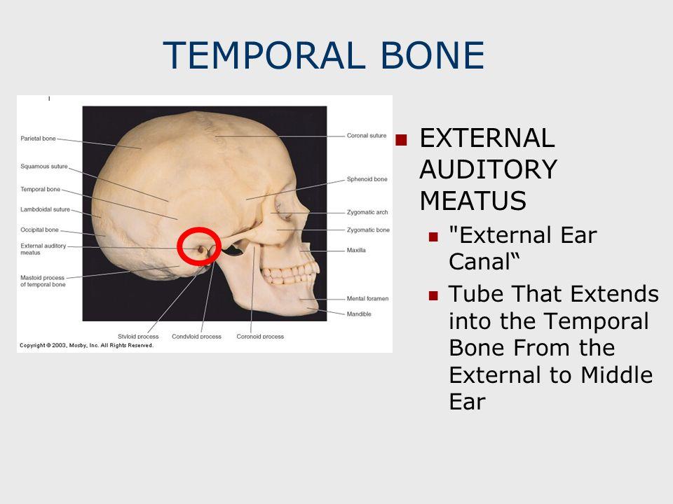 TEMPORAL BONE EXTERNAL AUDITORY MEATUS External Ear Canal