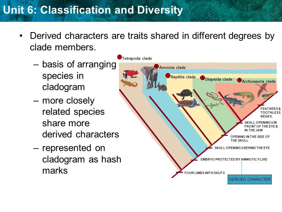 basis of arranging species in cladogram
