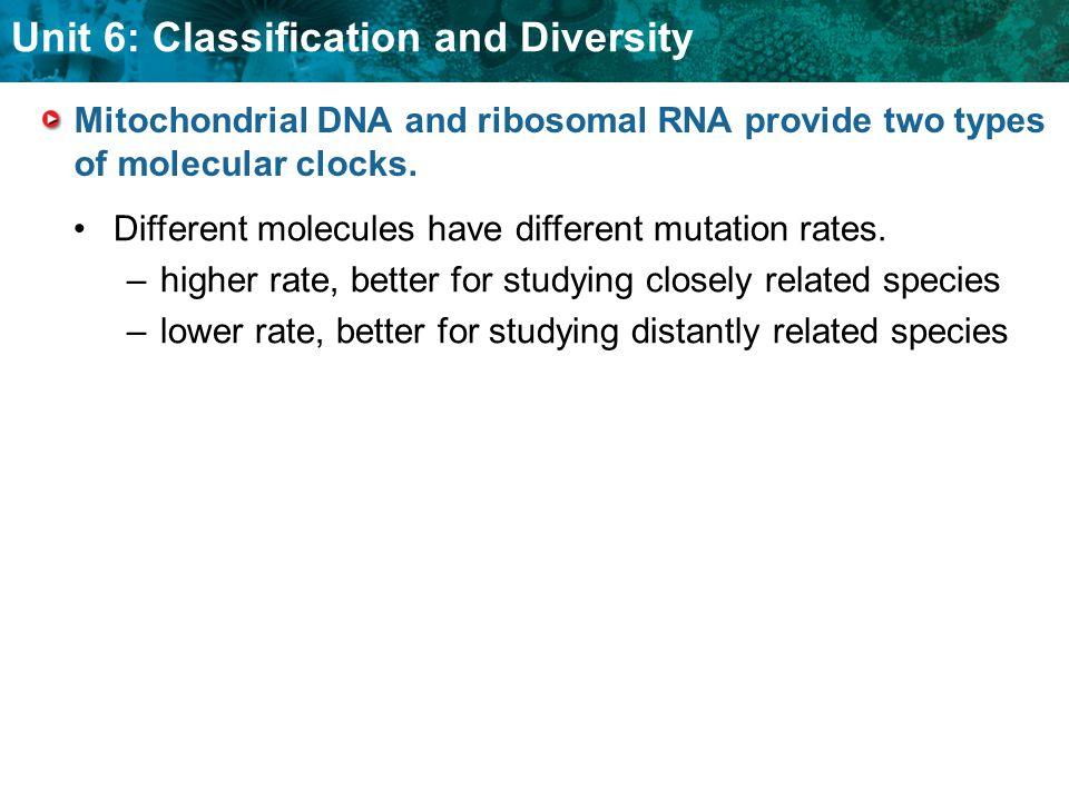 Mitochondrial DNA and ribosomal RNA provide two types of molecular clocks.