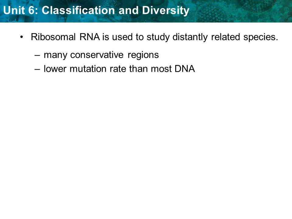 Ribosomal RNA is used to study distantly related species.