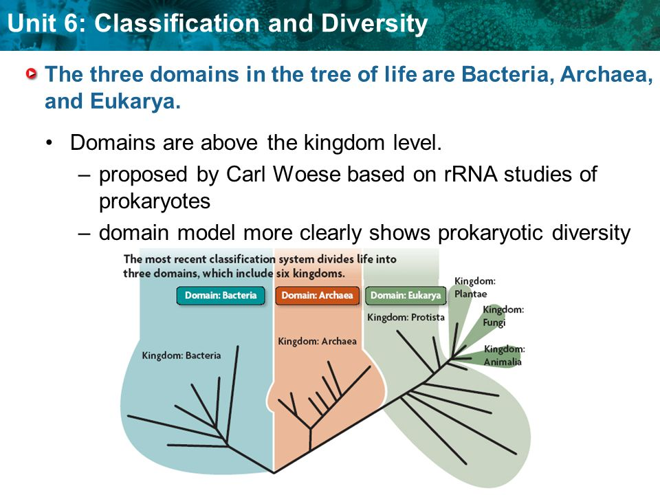 The three domains in the tree of life are Bacteria, Archaea, and Eukarya.