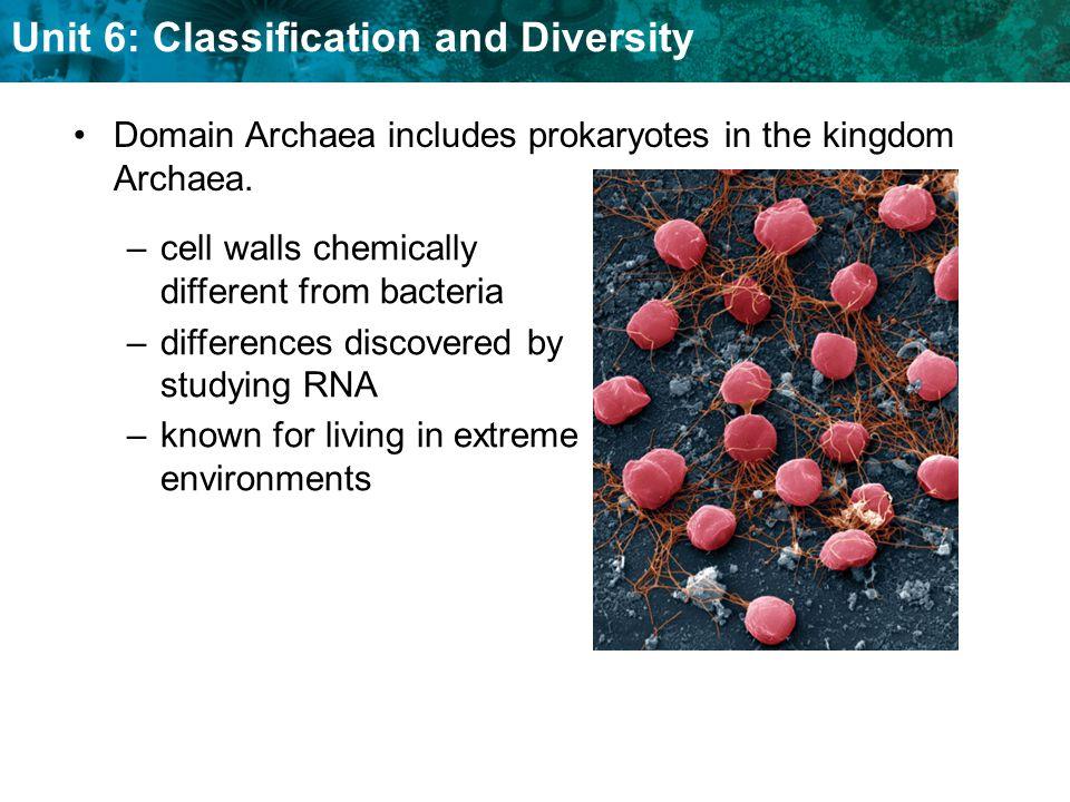 Domain Archaea includes prokaryotes in the kingdom Archaea.