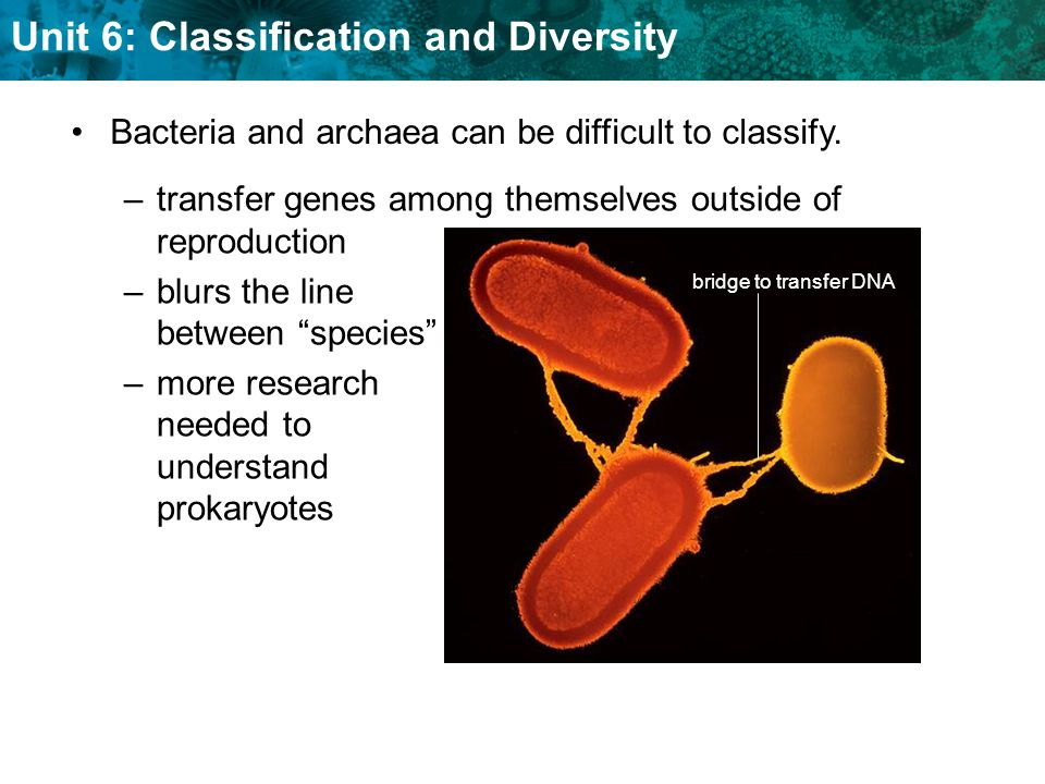 Bacteria and archaea can be difficult to classify.