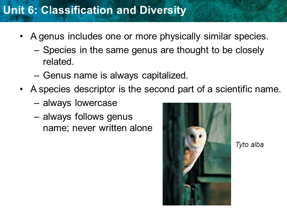 A genus includes one or more physically similar species.