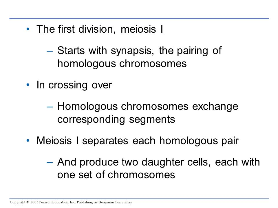 The first division, meiosis I