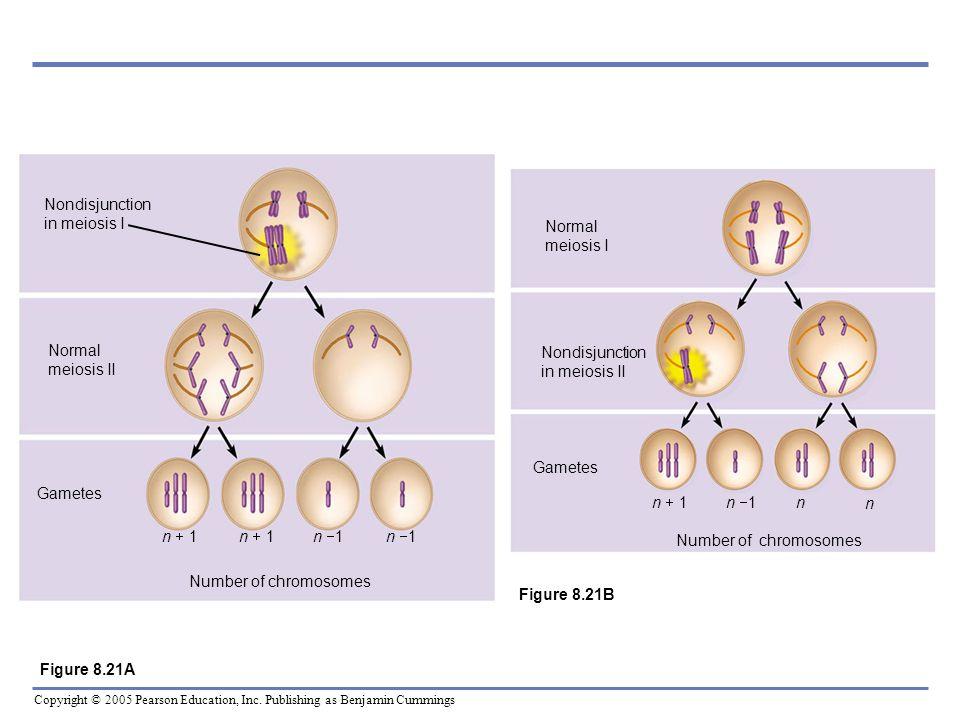 Nondisjunction in meiosis INormal meiosis II. Gametes. n + 1. n 1. Number of chromosomes. Nondisjunction in meiosis II.