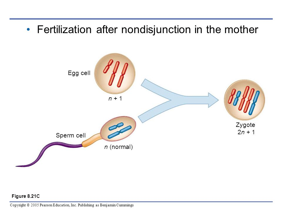 Fertilization after nondisjunction in the mother