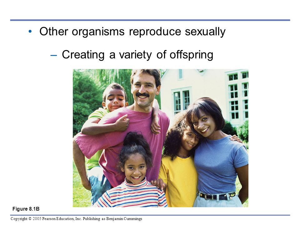 Other organisms reproduce sexually Creating a variety of offspring