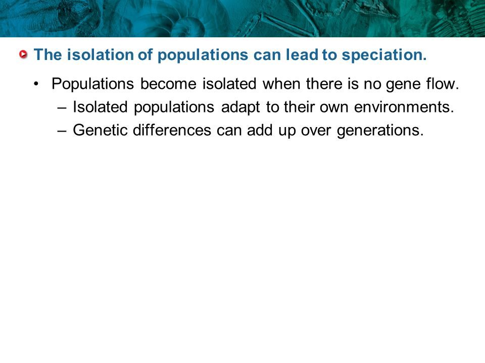 The isolation of populations can lead to speciation.