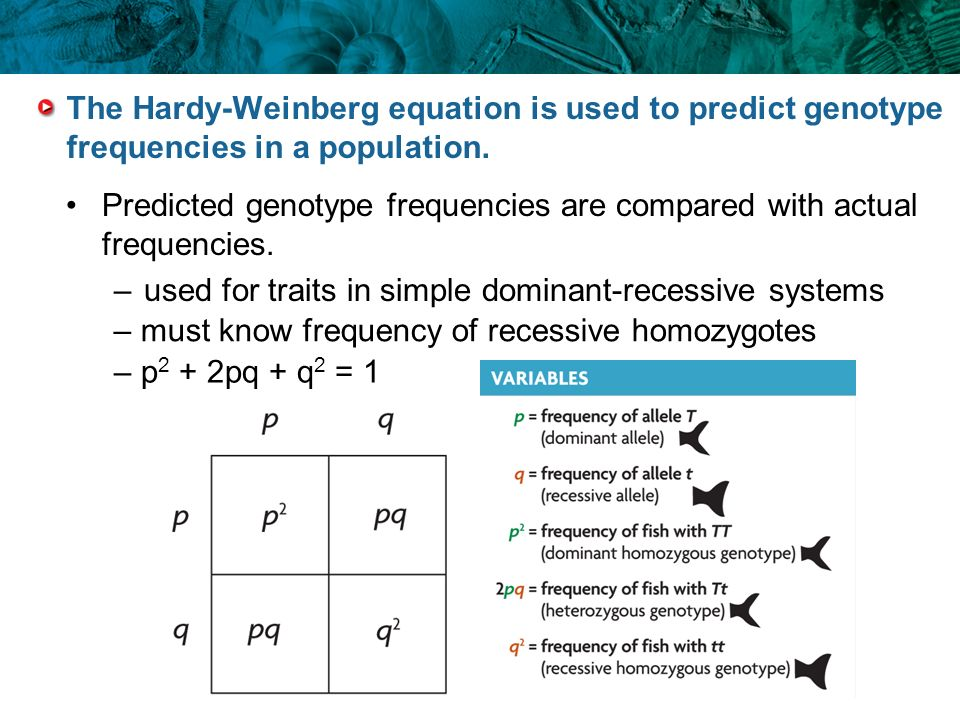 Predicted genotype frequencies are compared with actual frequencies.
