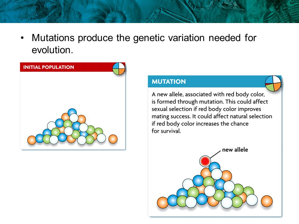 Mutations produce the genetic variation needed for evolution.