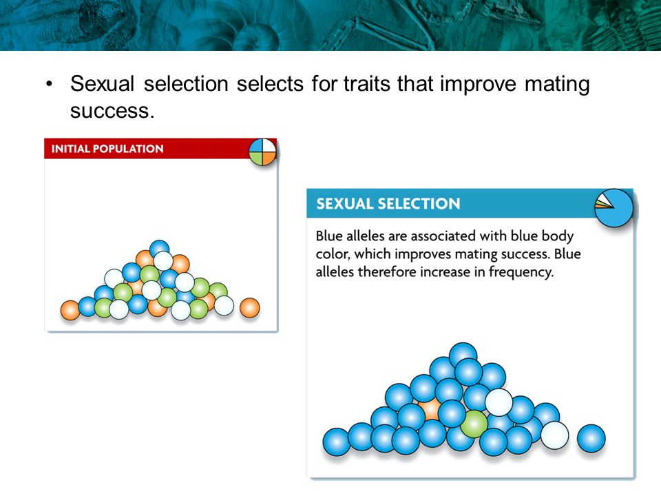 Sexual selection selects for traits that improve mating success.