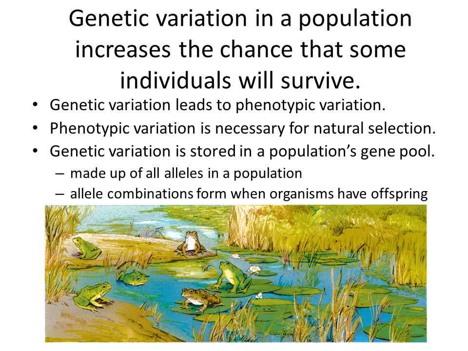 Genetic variation in a population increases the chance that some individuals will survive.