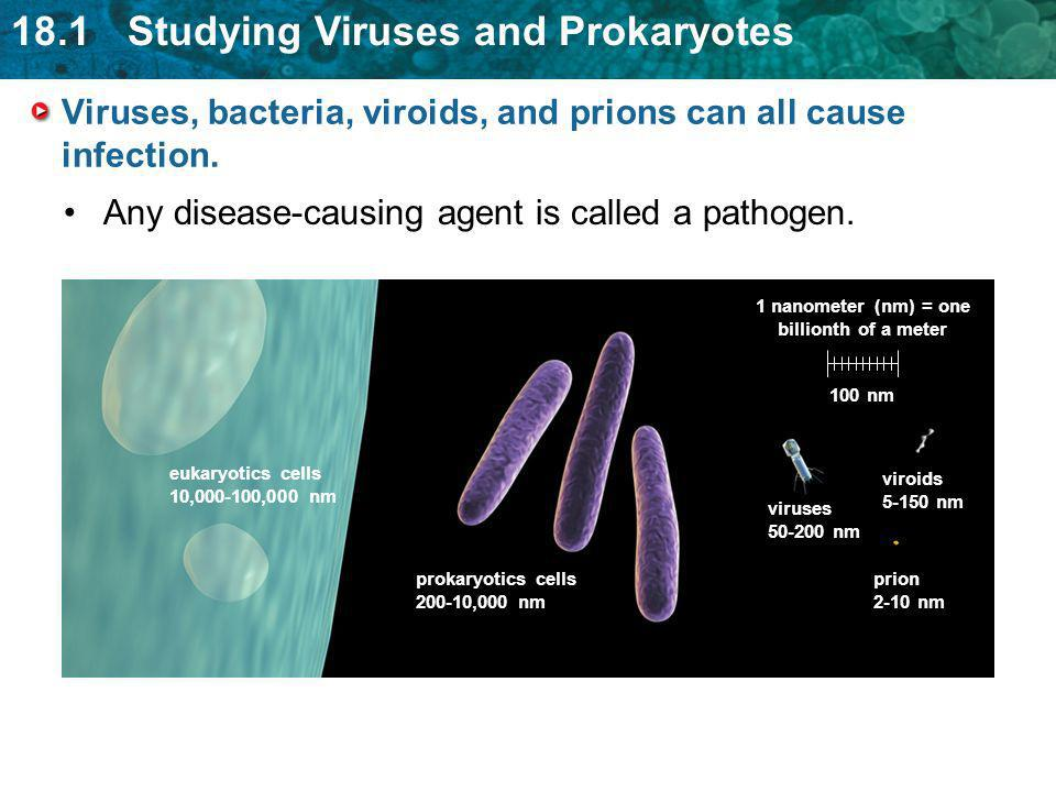 Viruses, bacteria, viroids, and prions can all cause infection.