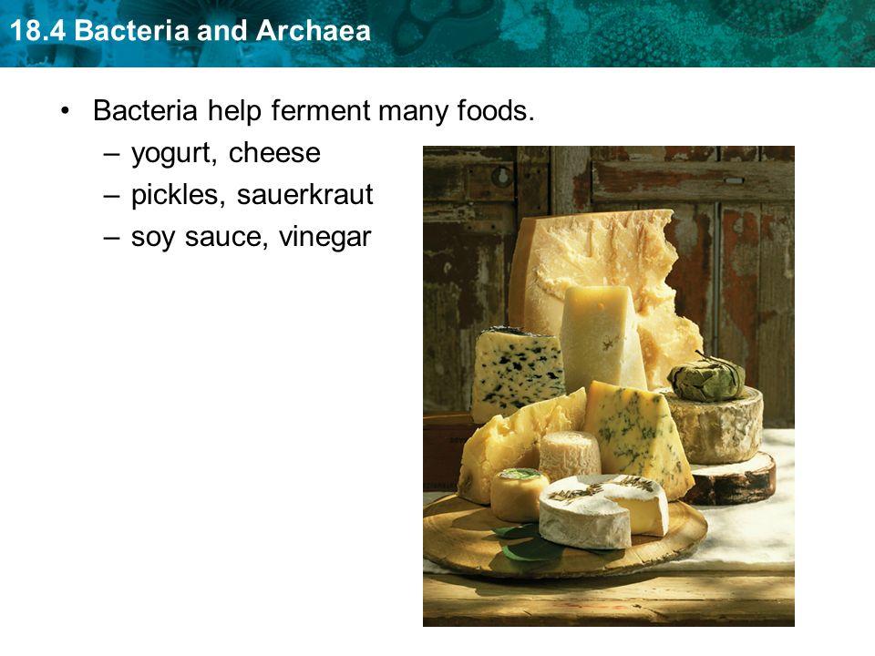 Bacteria help ferment many foods.