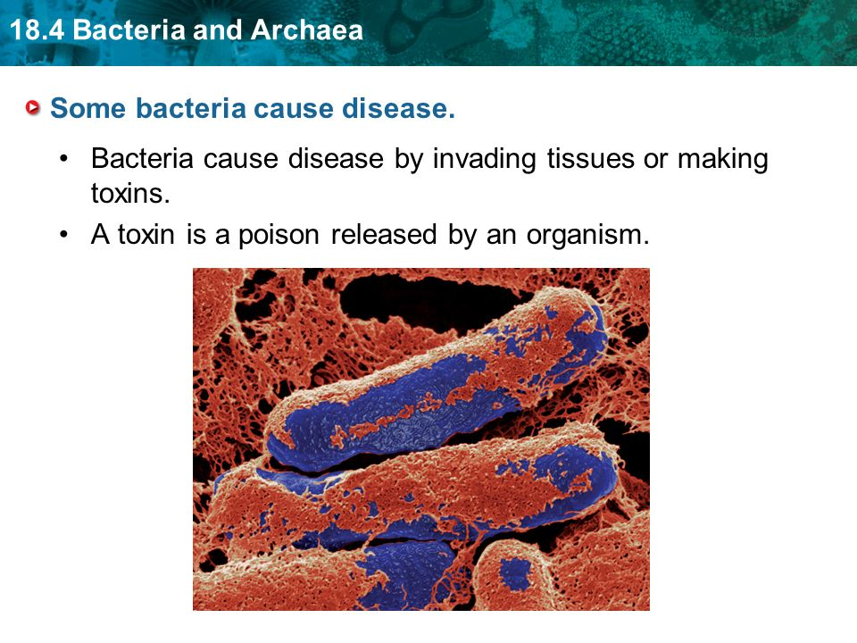 comprehensive analysis of microorganism that can cause disease found in toxins