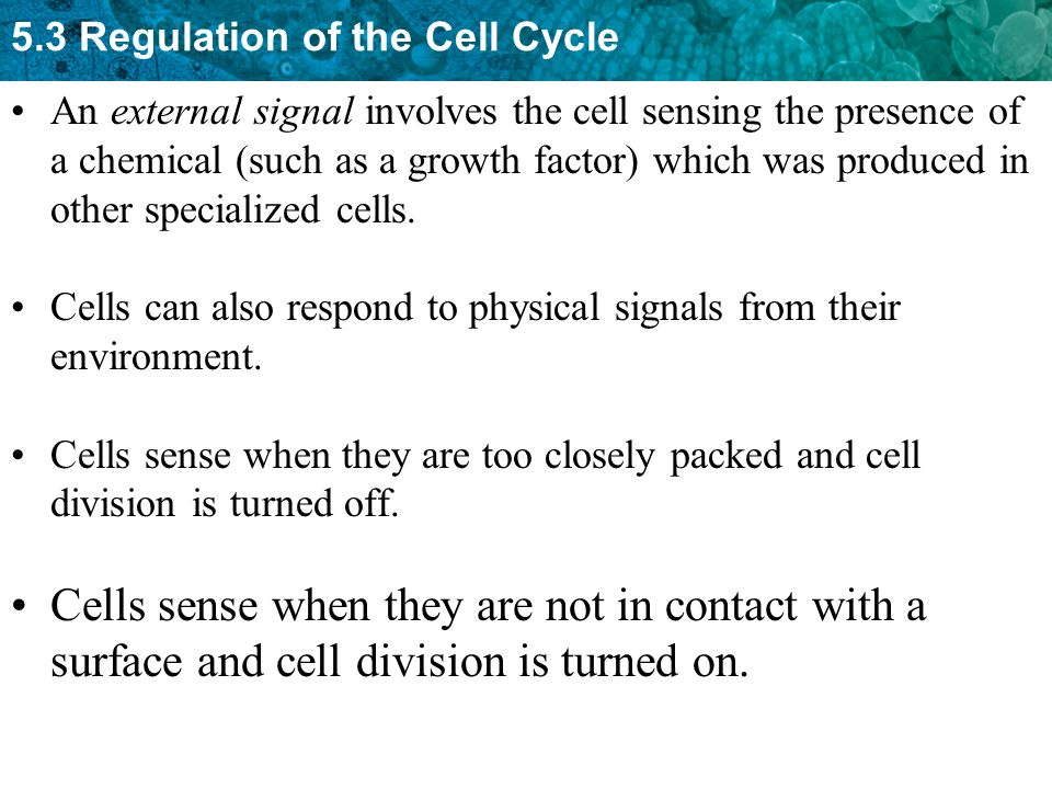 An external signal involves the cell sensing the presence of a chemical (such as a growth factor) which was produced in other specialized cells.