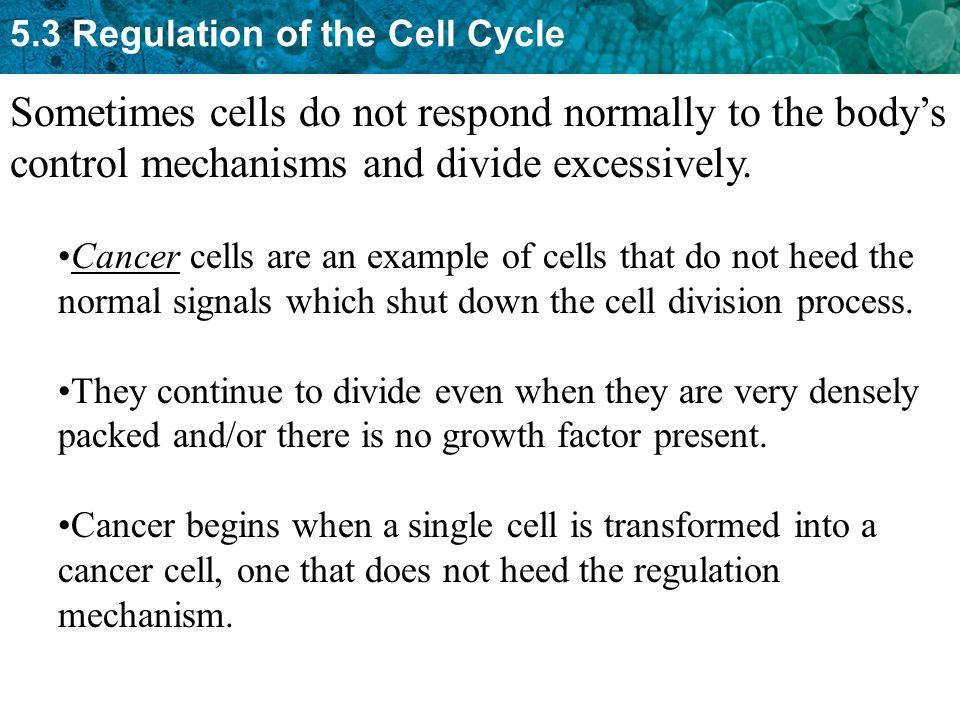 Sometimes cells do not respond normally to the body's control mechanisms and divide excessively.