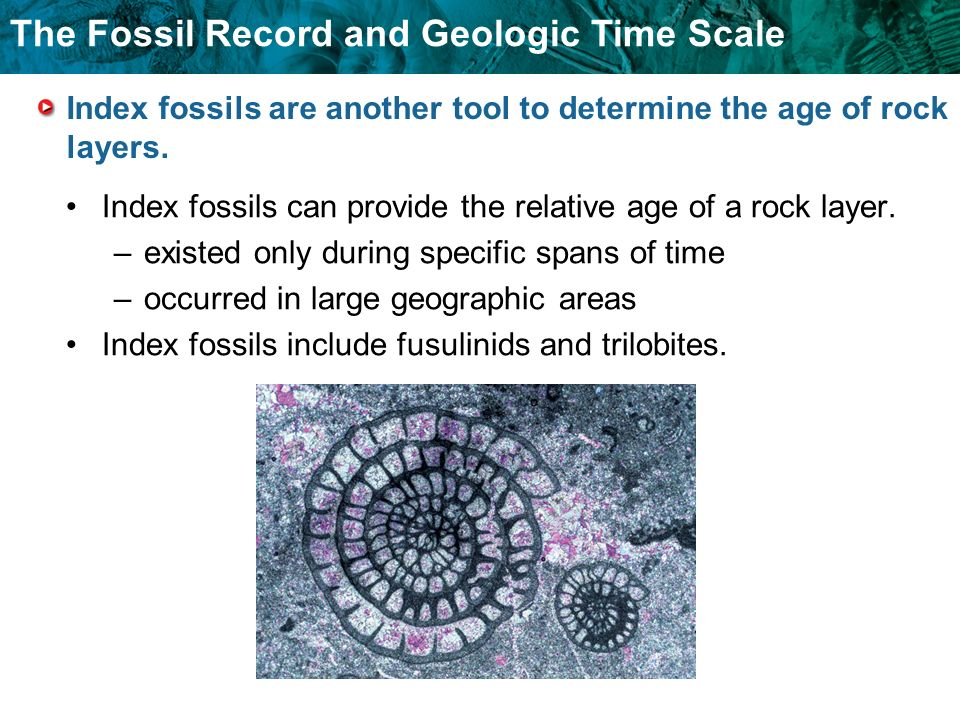 Index fossils are another tool to determine the age of rock layers.