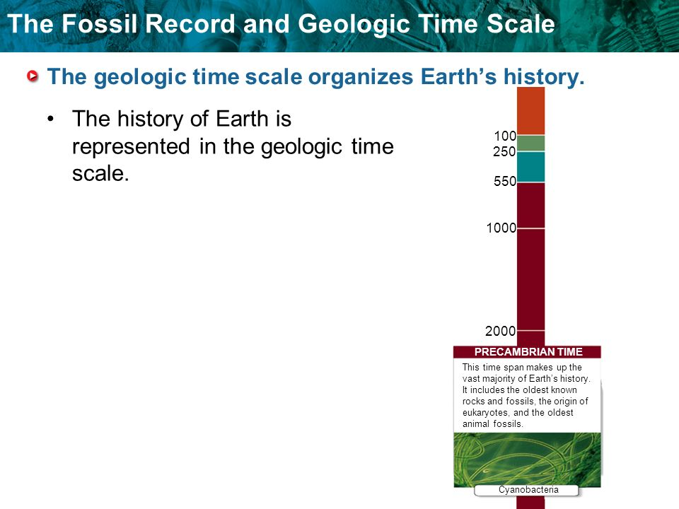 The geologic time scale organizes Earth's history.