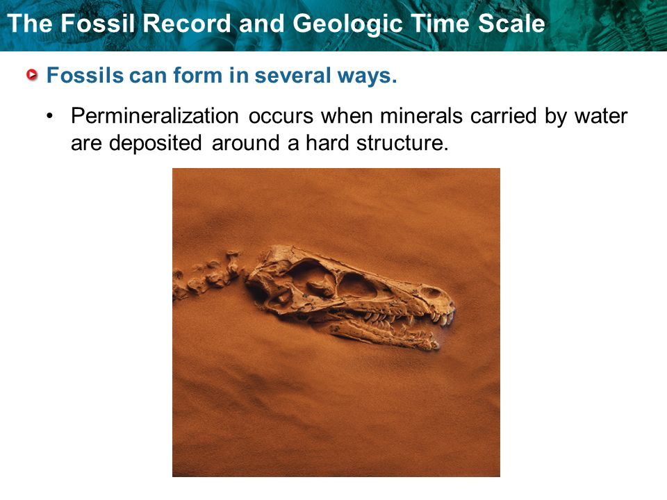 Fossils can form in several ways.