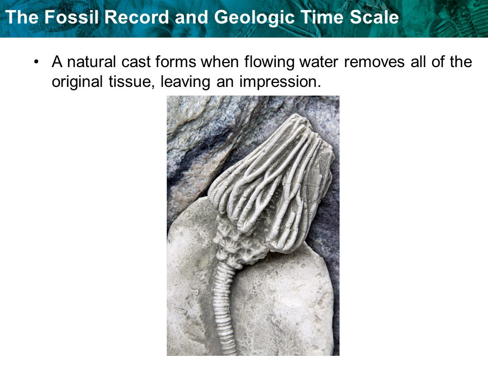 A natural cast forms when flowing water removes all of the original tissue, leaving an impression.