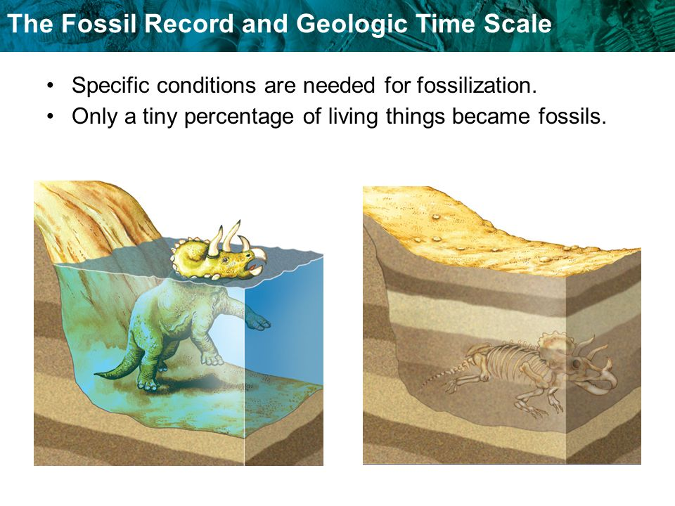 Specific conditions are needed for fossilization.