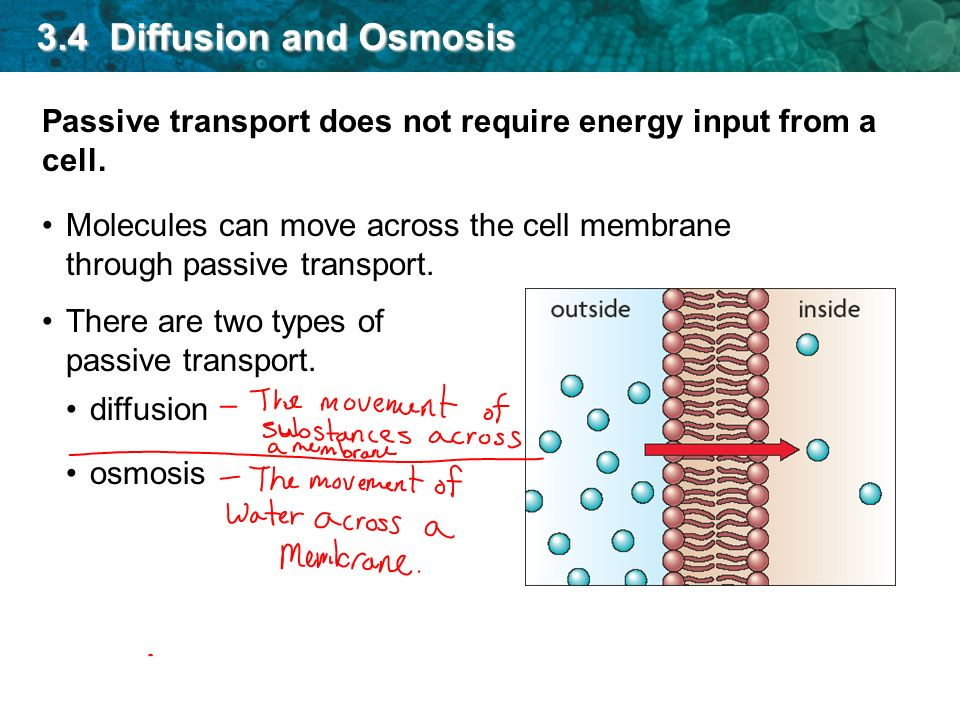 3.4 Diffusion and Osmosis Passive transport does not require energy input from a cell.