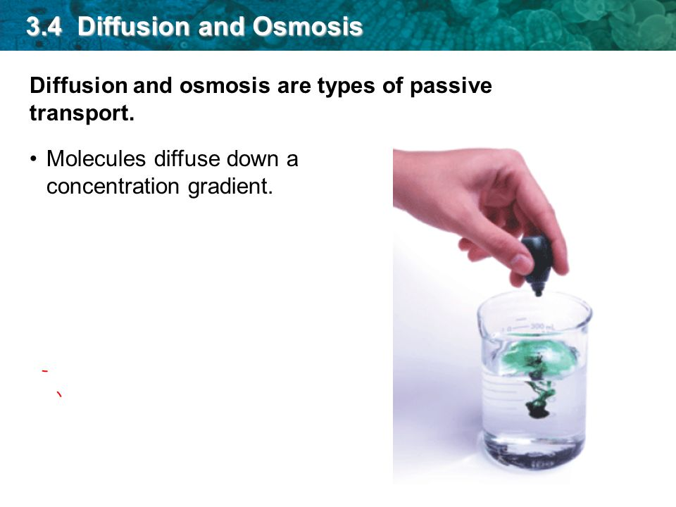 3.4 Diffusion and Osmosis Diffusion and osmosis are types of passive transport.