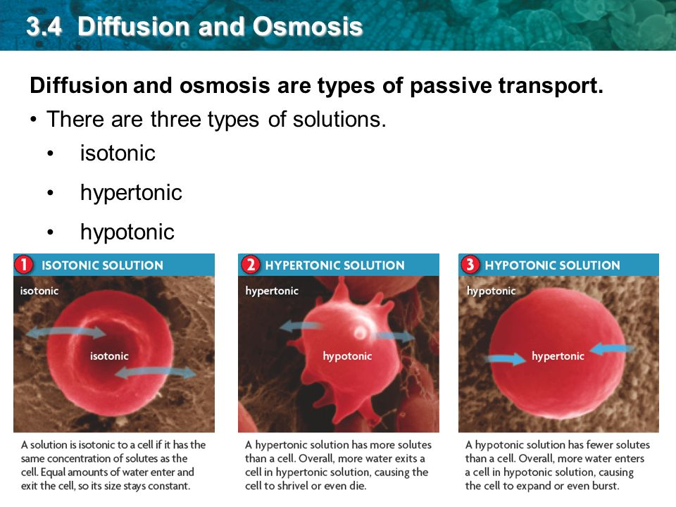 3.4 Diffusion and Osmosis Diffusion and osmosis are types of passive transport. There are three types of solutions.