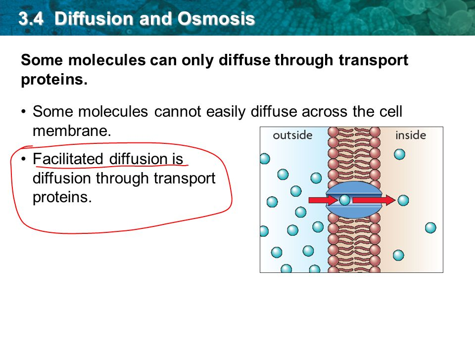 3.4 Diffusion and Osmosis Some molecules can only diffuse through transport proteins.