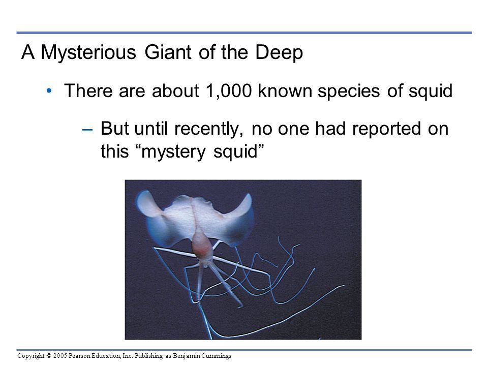 A Mysterious Giant of the Deep