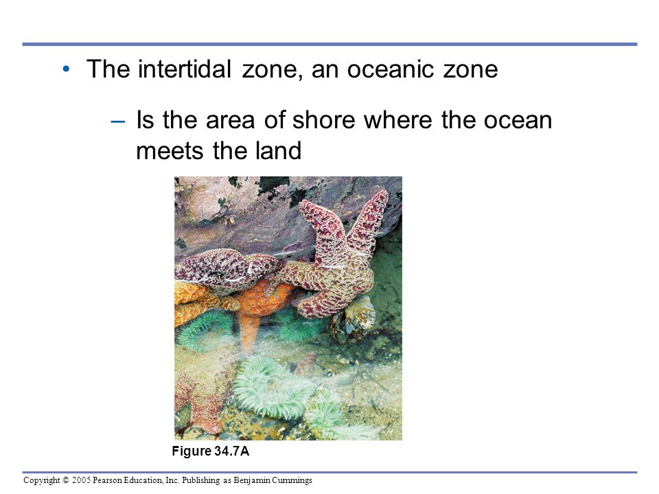 The intertidal zone, an oceanic zone