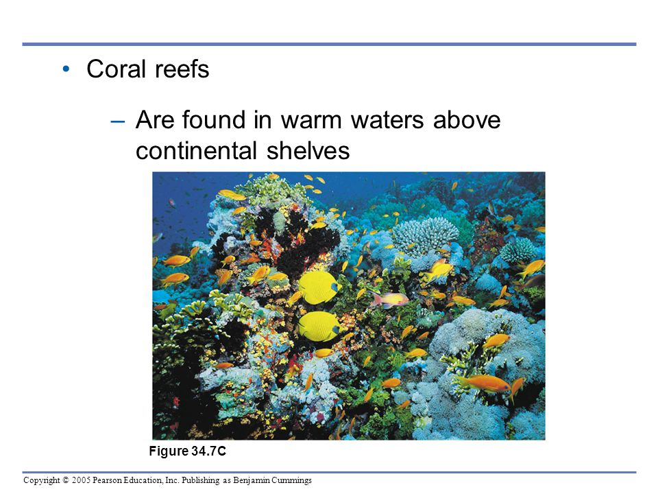 Are found in warm waters above continental shelves