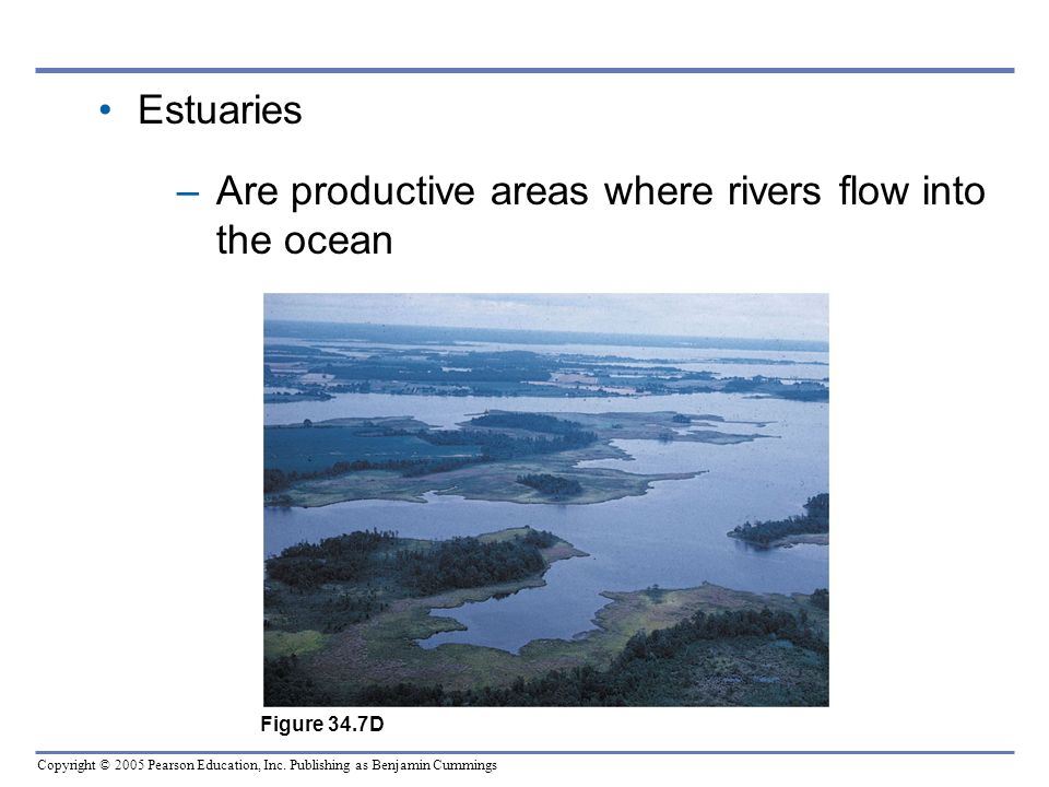 Are productive areas where rivers flow into the ocean