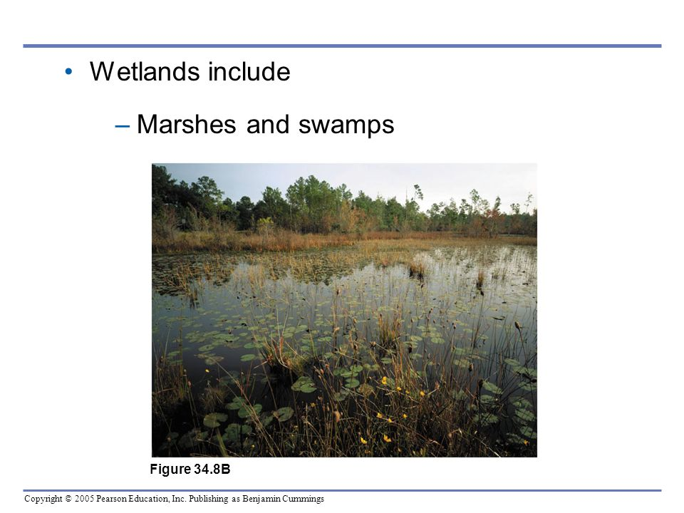 Wetlands include Marshes and swamps Figure 34.8B