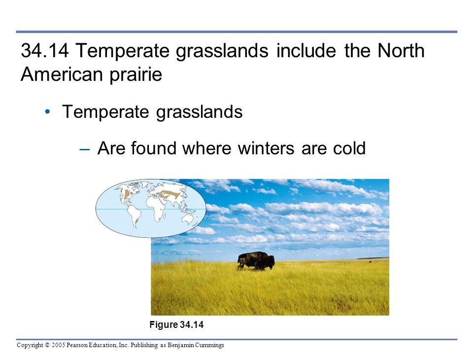 34.14 Temperate grasslands include the North American prairie