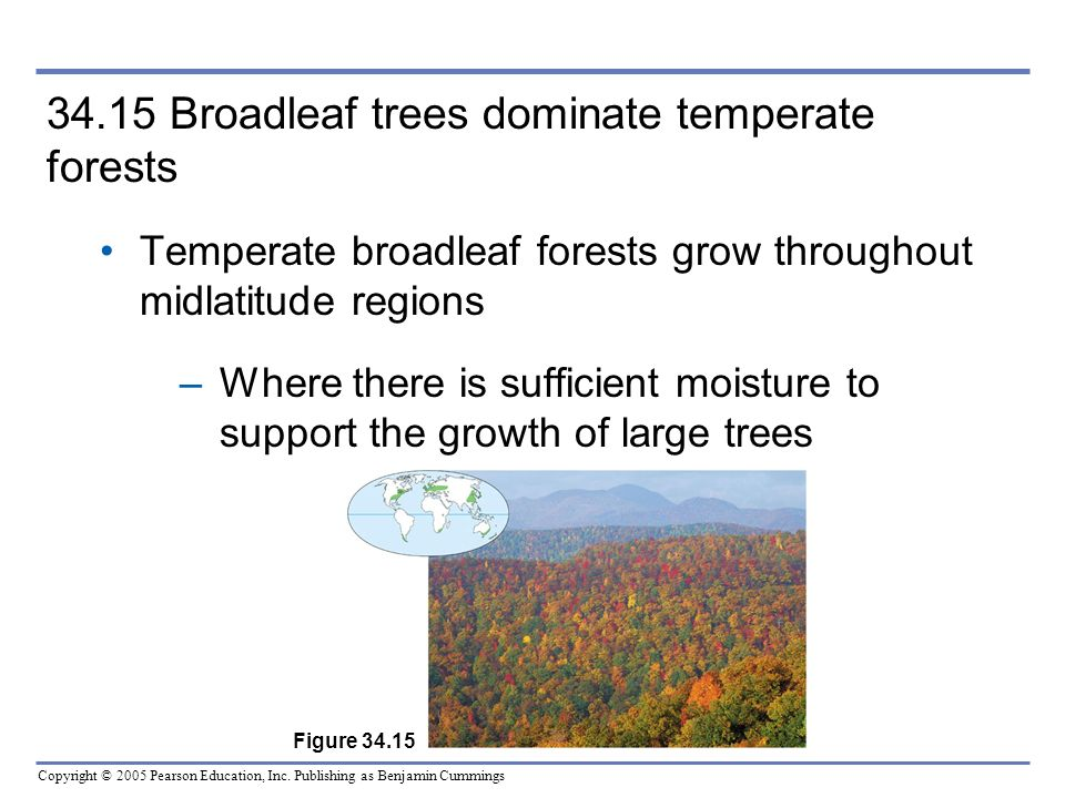 34.15 Broadleaf trees dominate temperate forests