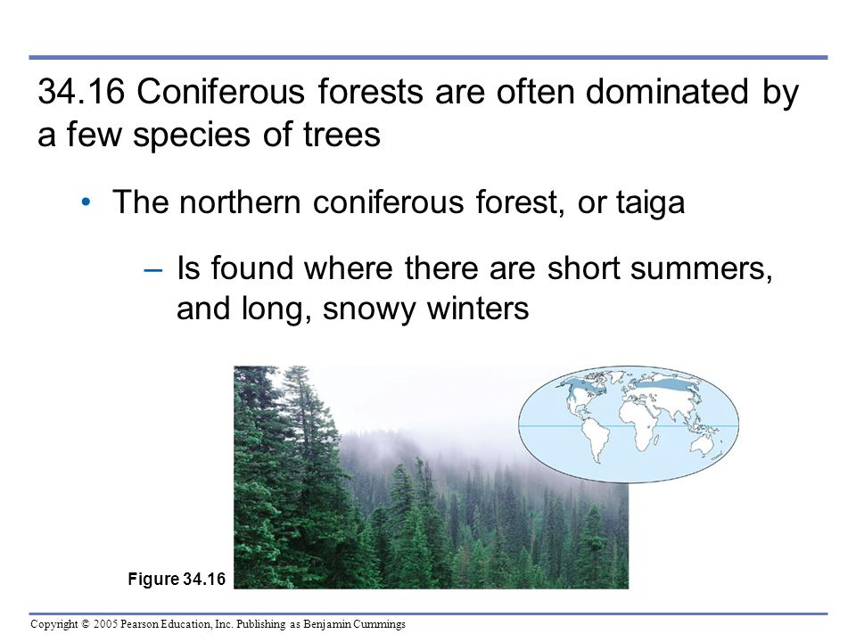 34.16 Coniferous forests are often dominated by a few species of trees