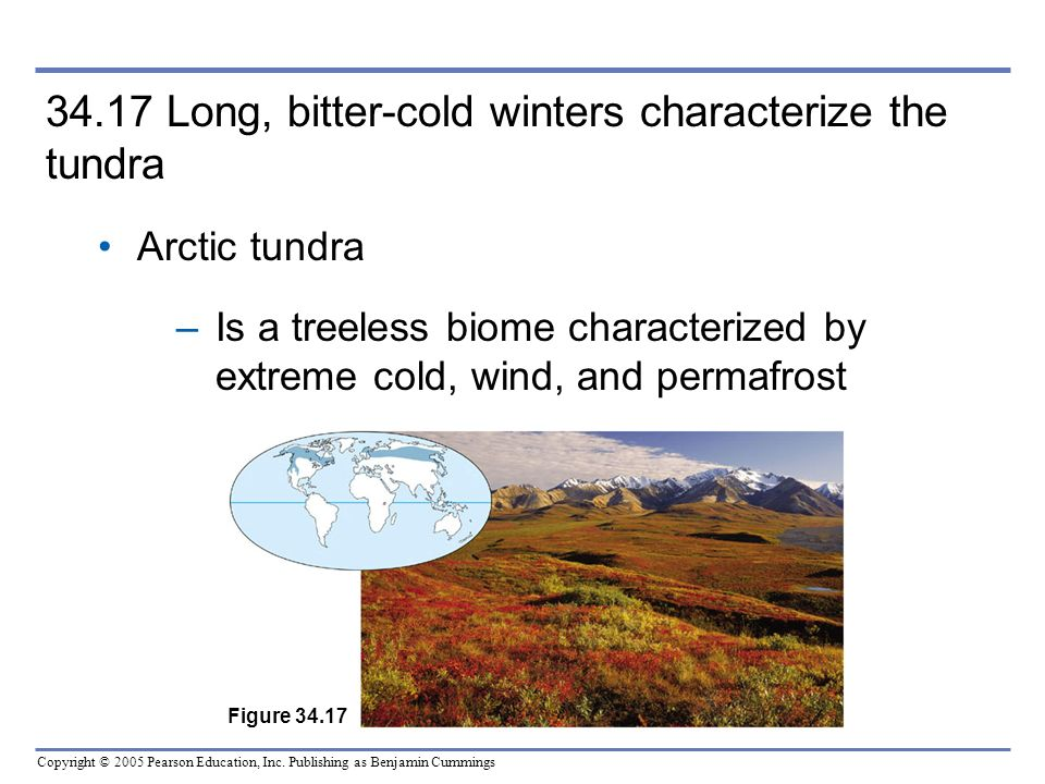 34.17 Long, bitter-cold winters characterize the tundra