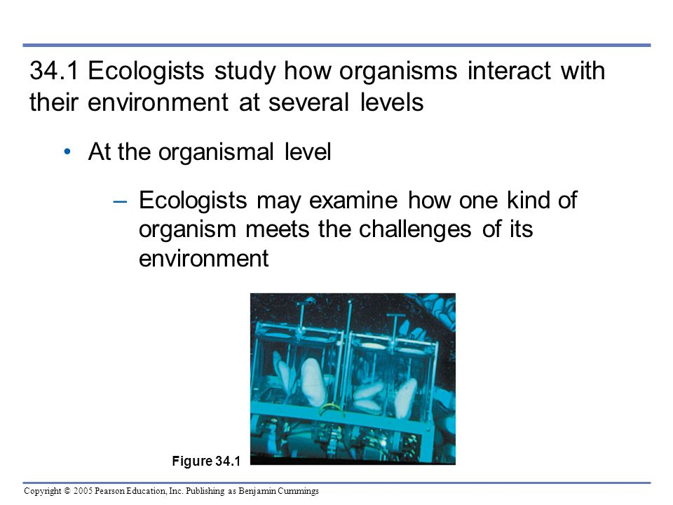 34.1 Ecologists study how organisms interact with their environment at several levels