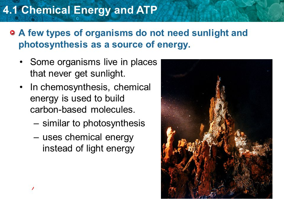A few types of organisms do not need sunlight and photosynthesis as a source of energy.