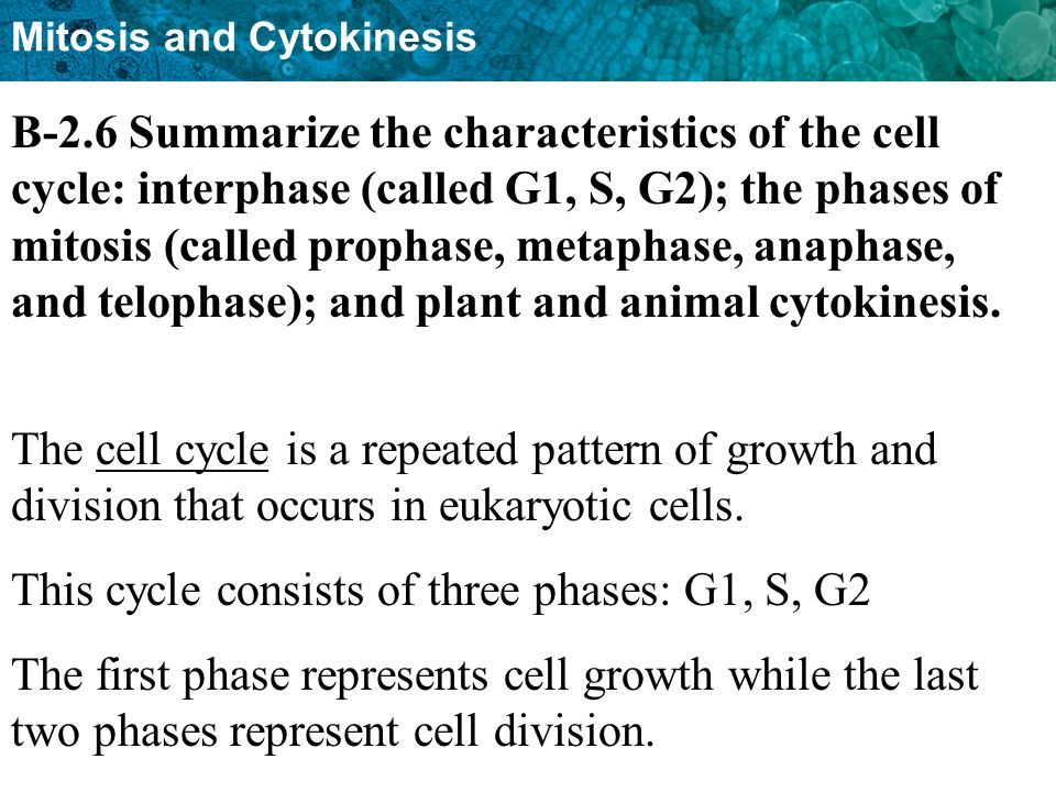 B-2.6 Summarize the characteristics of the cell cycle: interphase (called G1, S, G2); the phases of mitosis (called prophase, metaphase, anaphase, and telophase); and plant and animal cytokinesis.