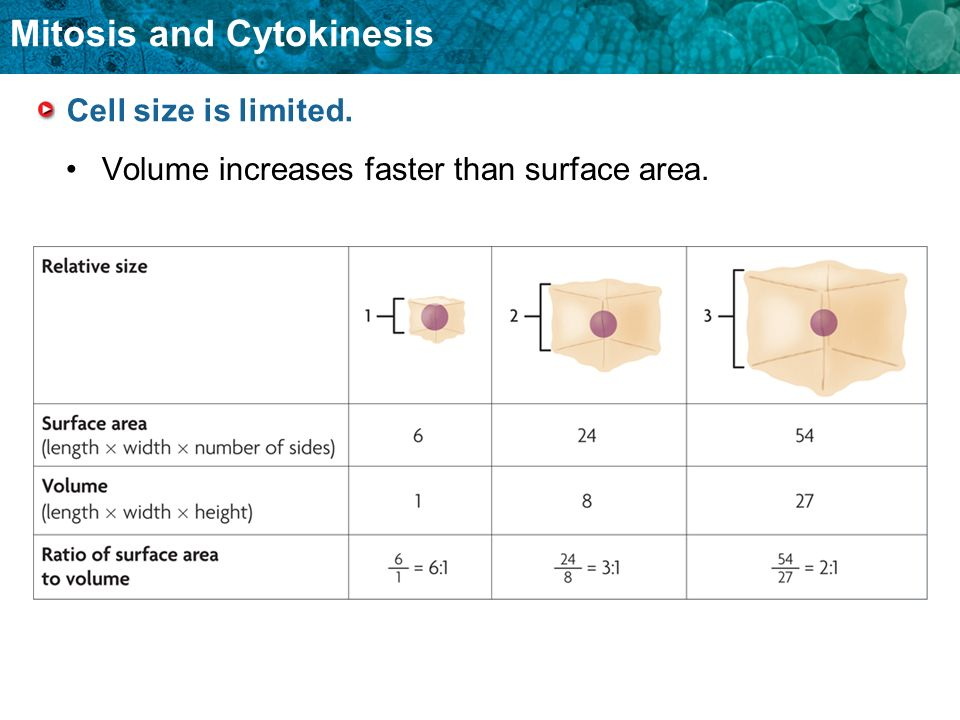 Cell size is limited. Volume increases faster than surface area.
