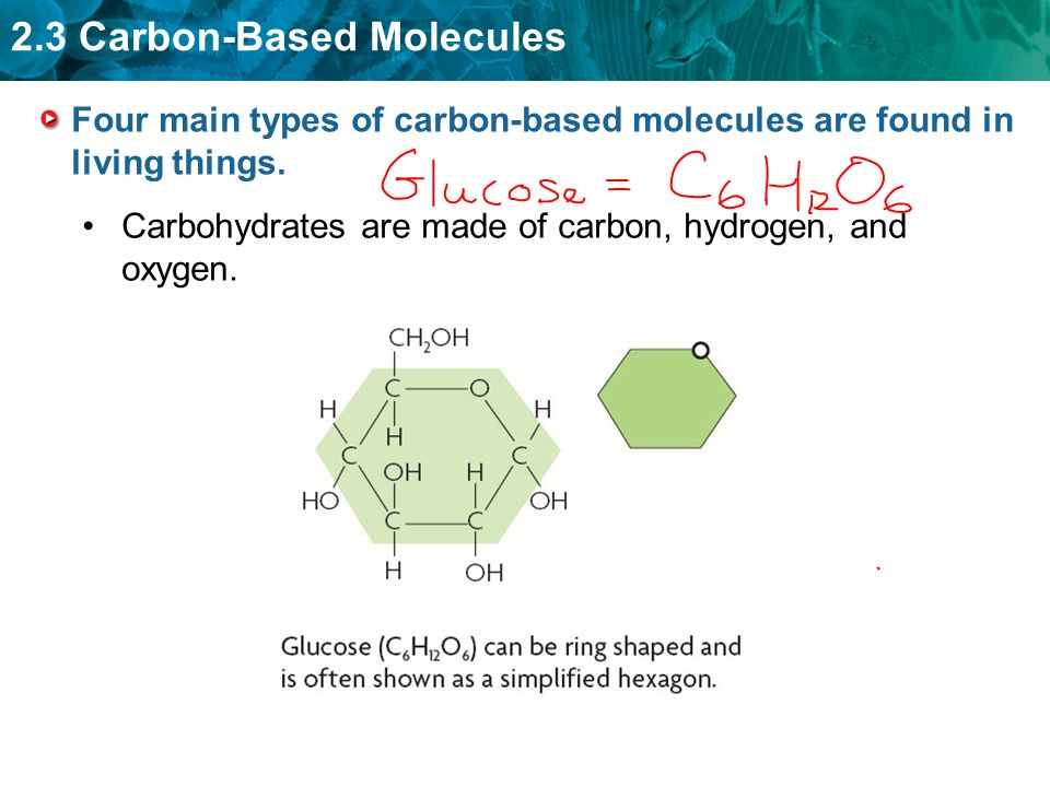 Four main types of carbon-based molecules are found in living things.