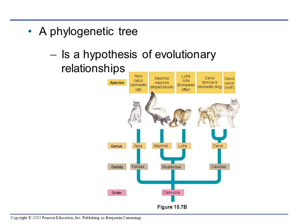 Is a hypothesis of evolutionary relationships